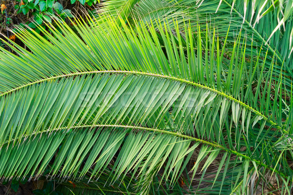 Yaprakları tropikal moda doğal taze yeşil Stok fotoğraf © neirfy