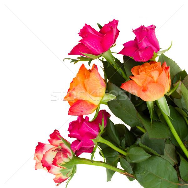 оранжевый розовато-лиловый роз изолированный белый Сток-фото © neirfy