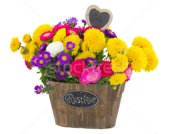 bouquet of  aster and mum flowers Stock photo © neirfy