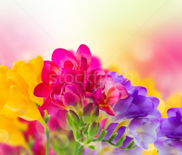 Niebieski różowy żółty kwiaty ogród bokeh Zdjęcia stock © neirfy