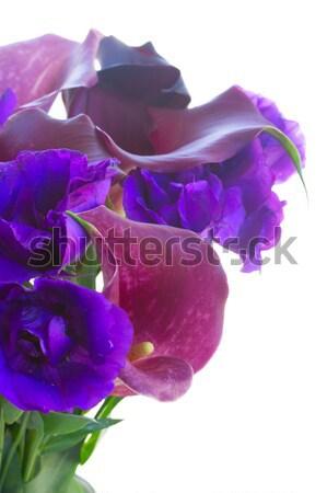 Calla lilly flowers Stock photo © neirfy