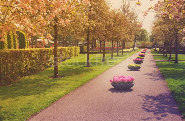 Bahçe Hollanda renkli bahar yol Stok fotoğraf © neirfy