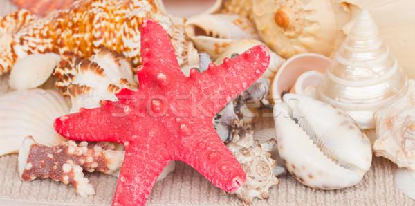 Starfish conchas fronteira toalha bandeira natureza Foto stock © neirfy