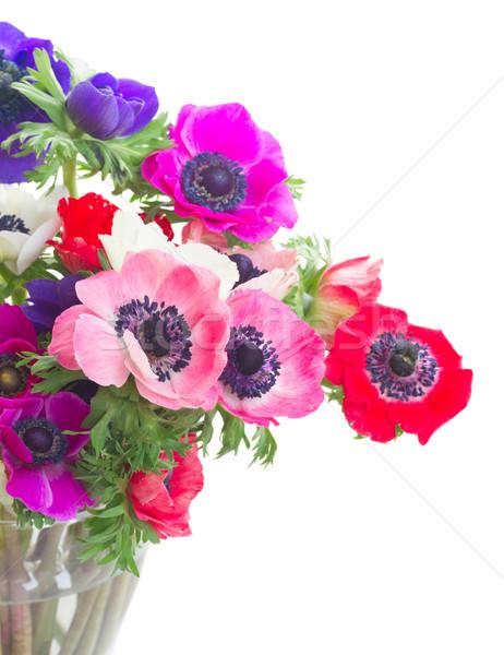 Branco fresco colorido flores isolado Foto stock © neirfy