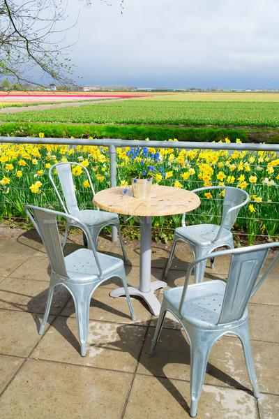 Narcisos fresco branco primavera crescente Foto stock © neirfy