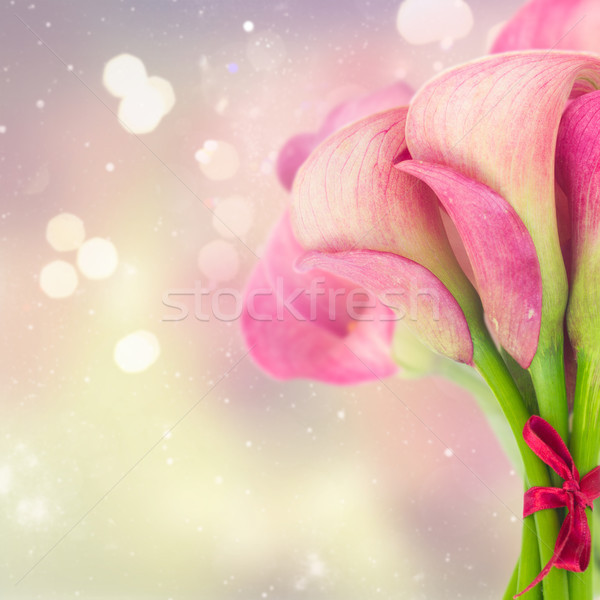 Pink Calla lilly Stock photo © neirfy