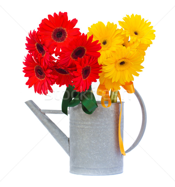 red and yellow gerbera flowers in watering can Stock photo © neirfy