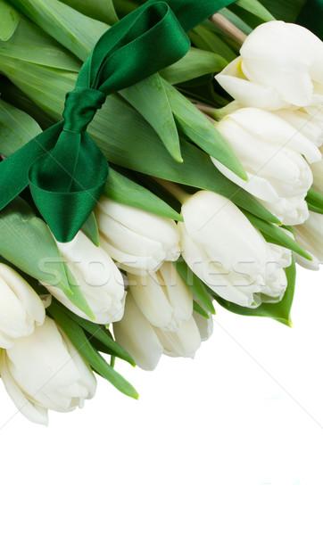 border  of white  tulips Stock photo © neirfy