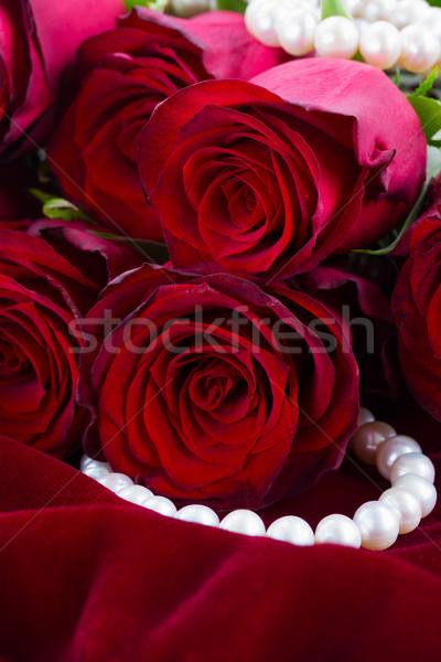 Piros rózsa bársony köteg friss virágok közelkép Stock fotó © neirfy