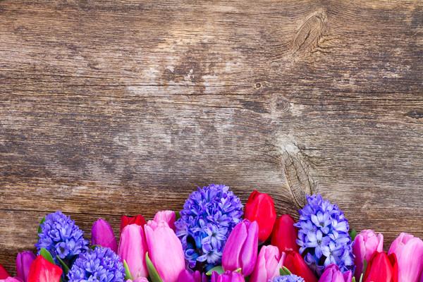 Azul jacinto tulipas fresco rosa fronteira Foto stock © neirfy