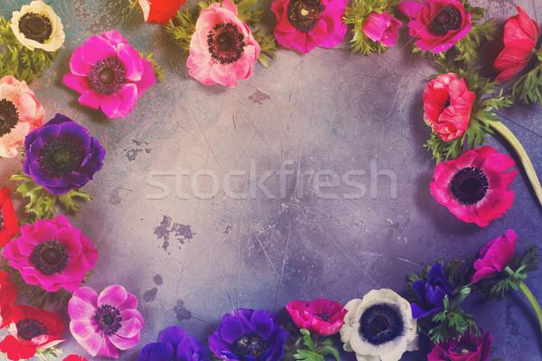 Flores pedra fresco colorido quadro cinza Foto stock © neirfy