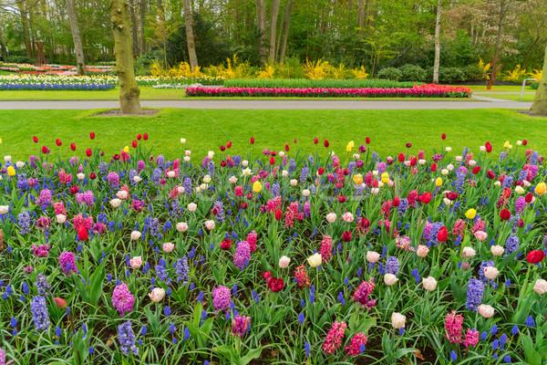 Formalny wiosną ogród kolorowy tulipany hiacynt Zdjęcia stock © neirfy
