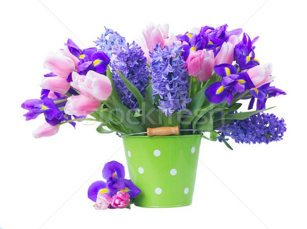Tulipánok rózsaszín kék friss virágok zöld Stock fotó © neirfy