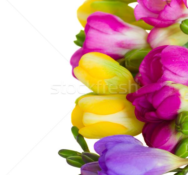 Fronteira isolado branco flor projeto Foto stock © neirfy
