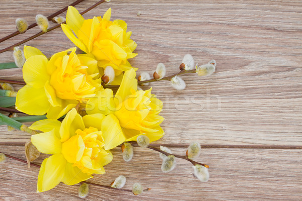 yellow narcissus flowers with catkins Stock photo © neirfy