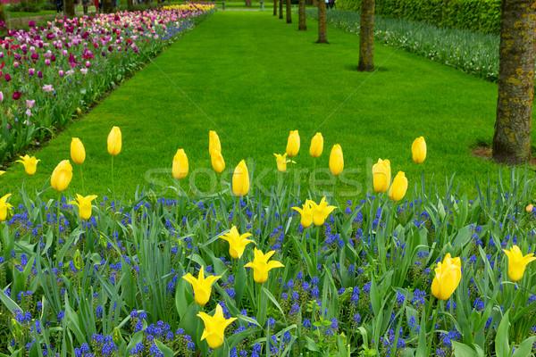 Colorato erba corsia aiuola fiori di primavera fiori Foto d'archivio © neirfy