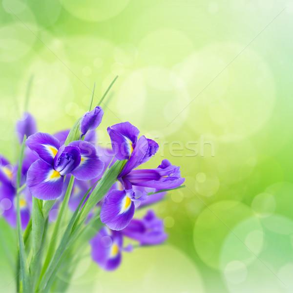 Сток-фото: синий · цветы · свежие · зеленый · bokeh · весны