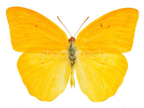абрикос бабочка изолированный белый весны аннотация Сток-фото © neirfy