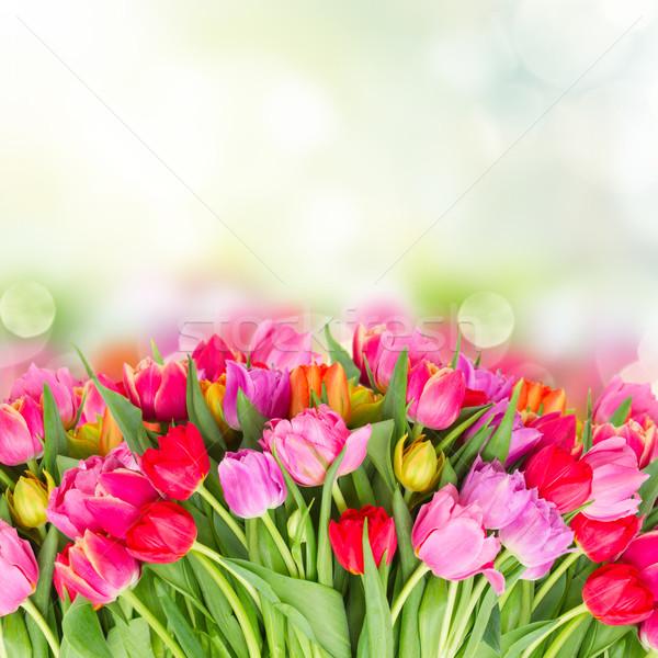 Ramo rosa púrpura rojo tulipanes Foto stock © neirfy