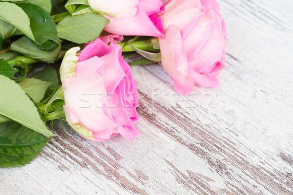 ピンク 新鮮な バラ 光 水滴 白 ストックフォト © neirfy