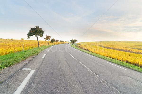 Vinho rota estrada amarelo outono França Foto stock © neirfy
