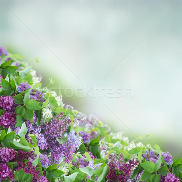 Bokor orgona virágok keret kék bokeh Stock fotó © neirfy