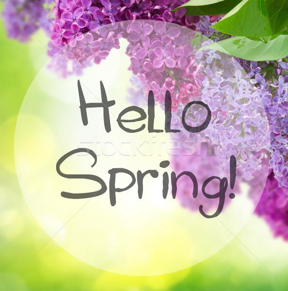 сирень цветы дерево зеленый привет весны Сток-фото © neirfy