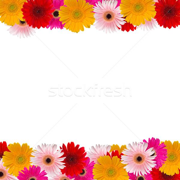 Fleurs renommée cadre isolé blanche fleur Photo stock © neirfy