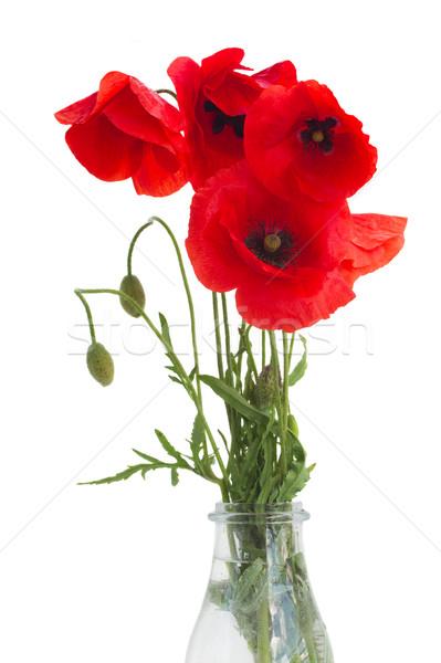 poppy flowers bouquet Stock photo © neirfy