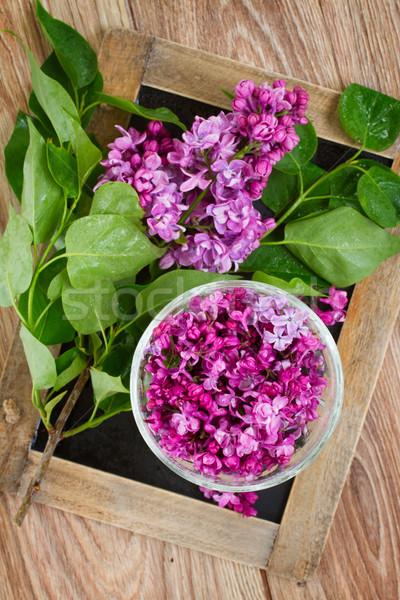 çiçekler taze mor fincan ahşap masa Stok fotoğraf © neirfy