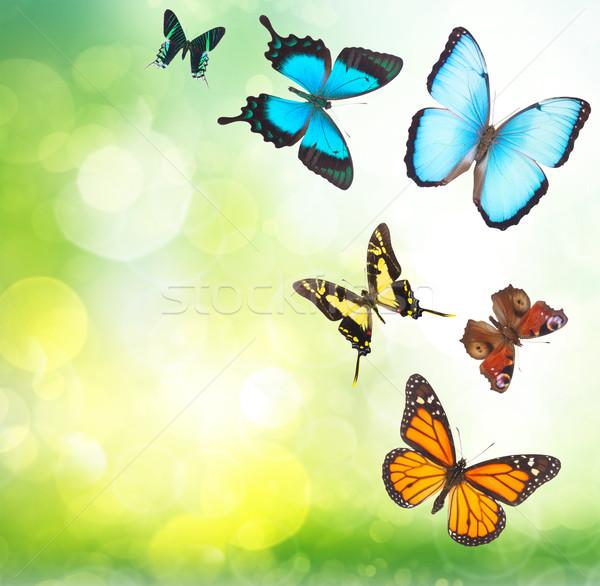 Tropical butterflies in garden  Stock photo © neirfy