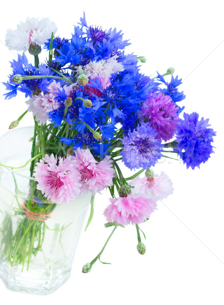 cornflowers on white Stock photo © neirfy