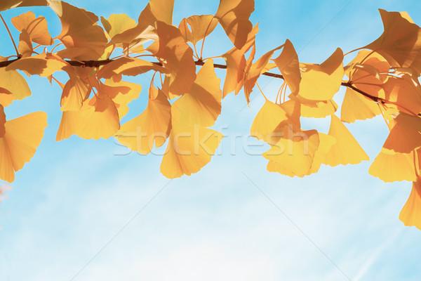 Canlı düşmek yeşillik sarı altın ağaç Stok fotoğraf © neirfy