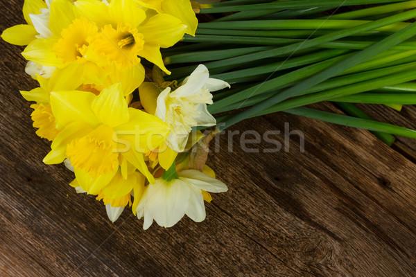 新鮮な 春 水仙 光 暗い 黄色の花 ストックフォト © neirfy
