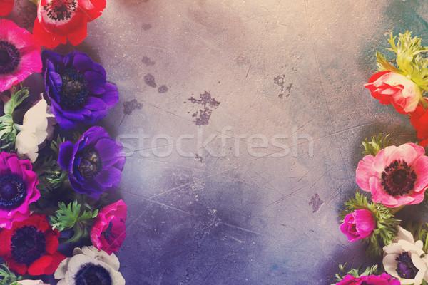 Flores pedra fresco colorido fronteira cinza Foto stock © neirfy