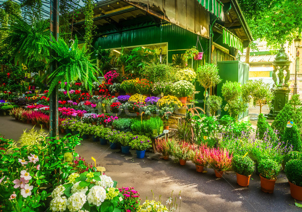 Paris flower market Stock photo © neirfy