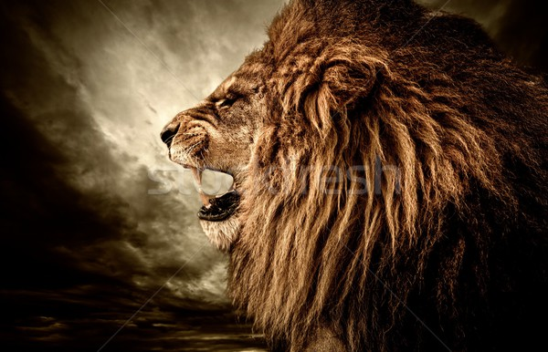 Roaring lion against stormy sky  Stock photo © Nejron