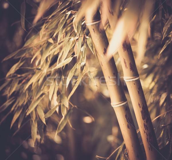 Kép bambusz növény absztrakt levél kert Stock fotó © Nejron