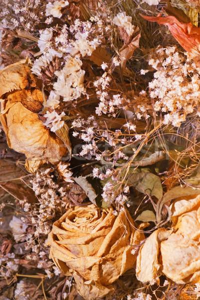 Secar flores flor grama abstrato outono Foto stock © Nejron