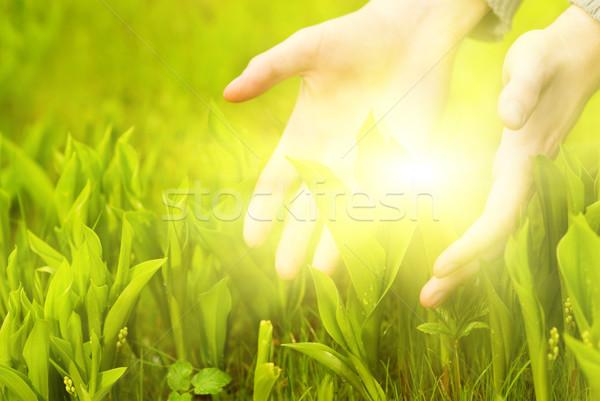 Human hands touching green grass. Beautiful shining betweet them Stock photo © Nejron