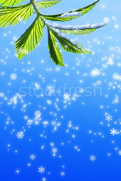 Green leaf on abstract snowflake background Stock photo © Nejron