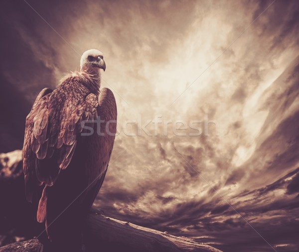 Eagle sitting on a log against stormy sky Stock photo © Nejron