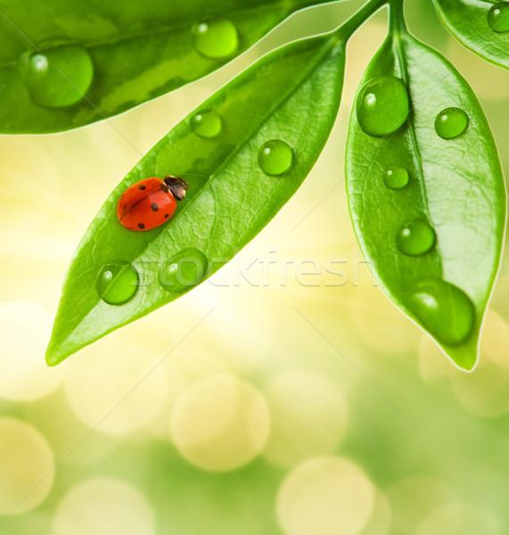 Joaninha sessão folha verde grama natureza fundo Foto stock © Nejron