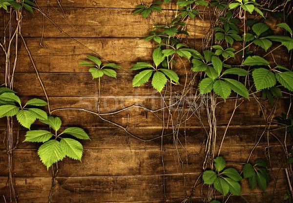 Absztrakt fából készült textúra zöld levelek fal zöld Stock fotó © Nejron