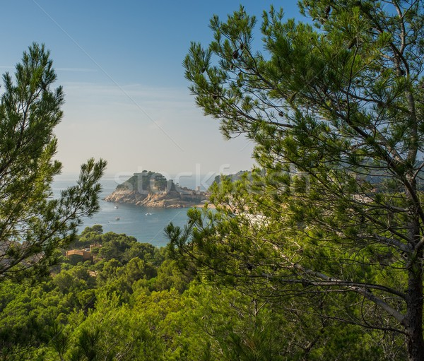 Tossa de Mar view through pine trees Stock photo © Nejron