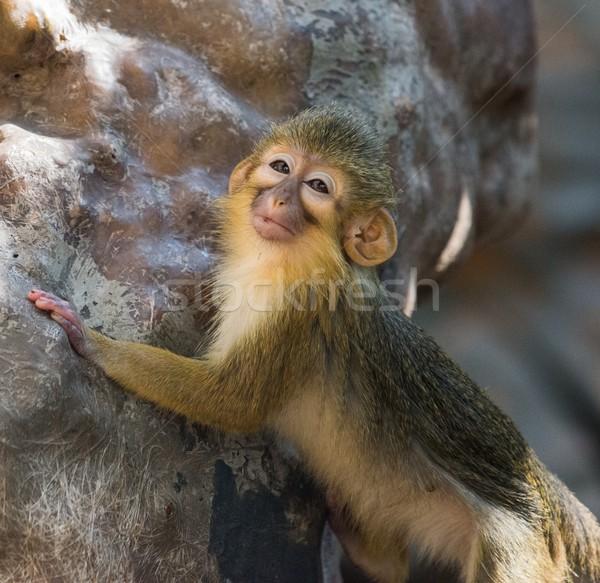 мало смешные Габон лице природы Африка Сток-фото © Nejron