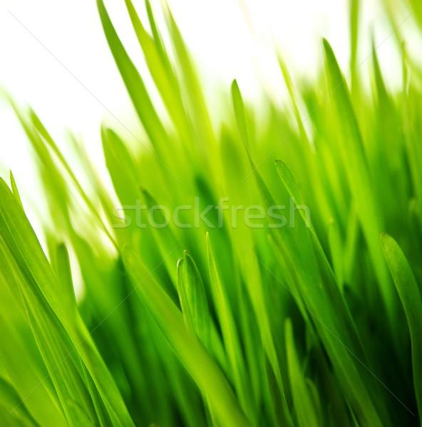 Fresh green grass background Stock photo © Nejron