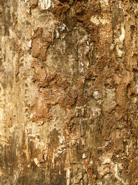 Wooden texture Stock photo © Nejron