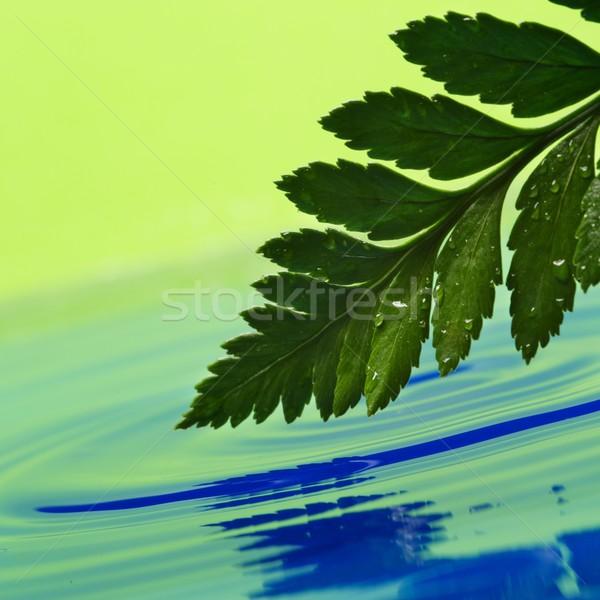 Fresche foglia verde reso acqua primavera natura Foto d'archivio © Nejron