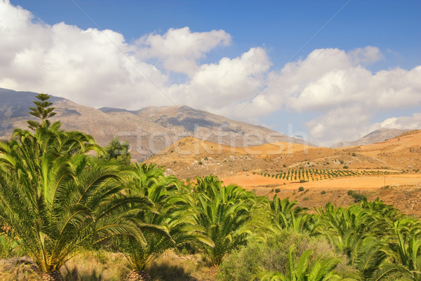 Beautiful landscape view to the palm grove with nice mountain pe Stock photo © Nejron